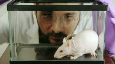 Website_Image_of_lab_rat_stock-footage-lab-rat-taken-by-scientist-hd-lab-rat-hairless-taken-from-a-glass-cage-by-a-scientist-in-two